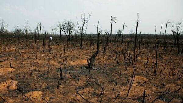 El bosque quemado en Bolivia - Sputnik Mundo