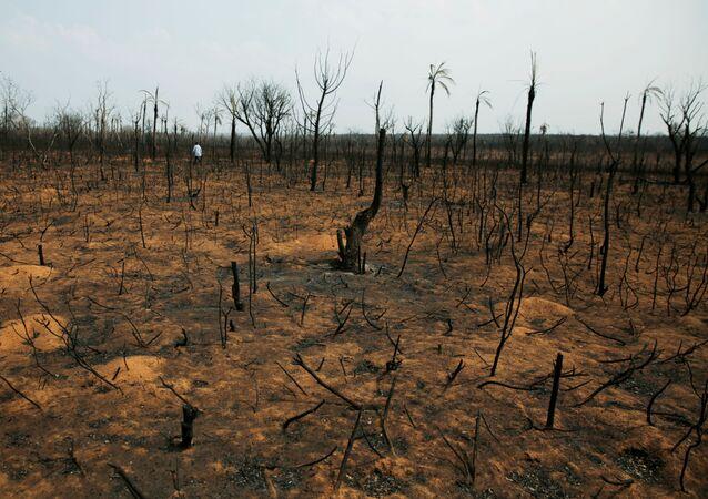 El bosque quemado en Bolivia