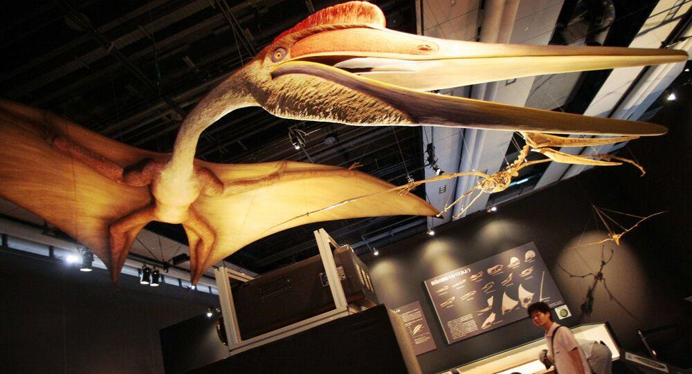 El pterosaurio Quetzalcoatlus (Archivo)