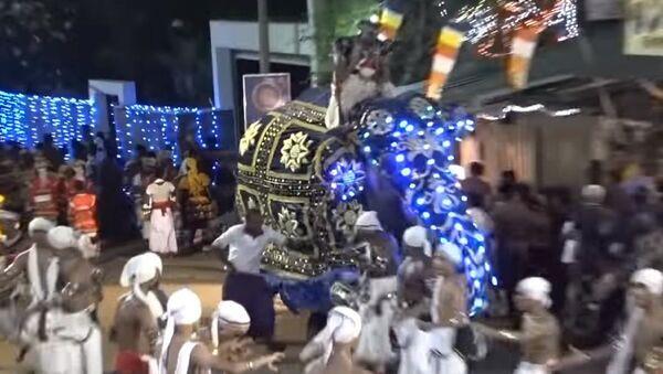 Un elefante pisotea a la multitud y deja numerosos heridos en Sri Lanka (fuertes imágenes) - Sputnik Mundo