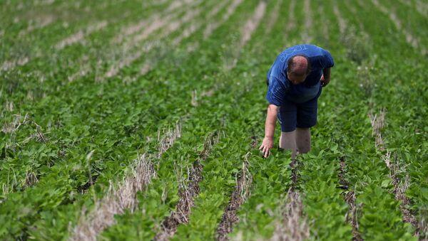 Un agricultor argentino en un campo de soja - Sputnik Mundo