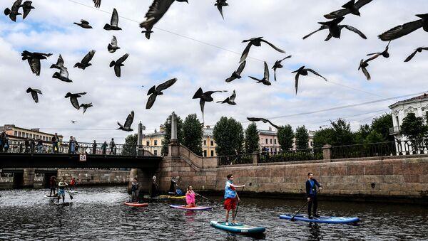 Palomas sobrevuelan San Petersburgo - Sputnik Mundo