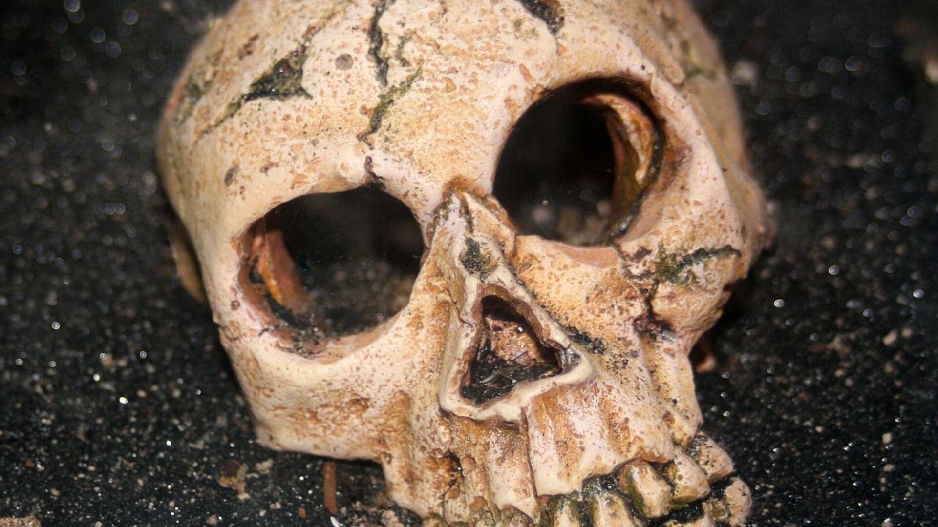 Cráneo humano (imagen referencial) - Sputnik Mundo, 1920, 12.03.2021