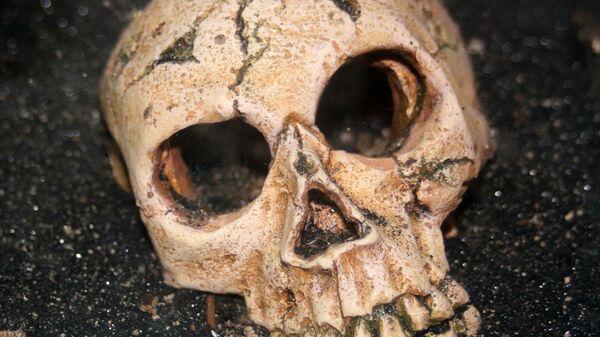 Cráneo humano (imagen referencial) - Sputnik Mundo