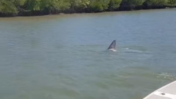 ¡Vaya susto! Un enorme tiburón se acerca a un barco pesquero  - Sputnik Mundo