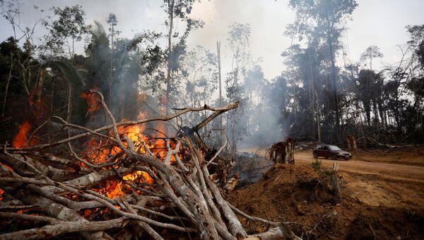 Consecuencias de los incendios forestales - Sputnik Mundo
