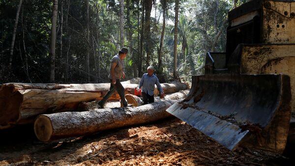 La deforestación en la Amazonía - Sputnik Mundo