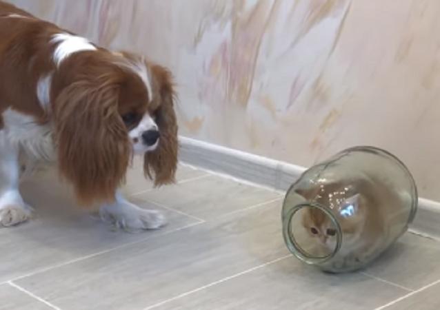 Un tierno gatito se esconde sin éxito en un frasco de vidrio