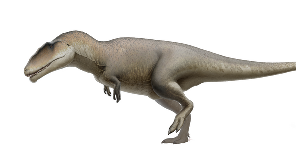 Un Carcharodontosauro, imagen creada por un artista - Sputnik Mundo
