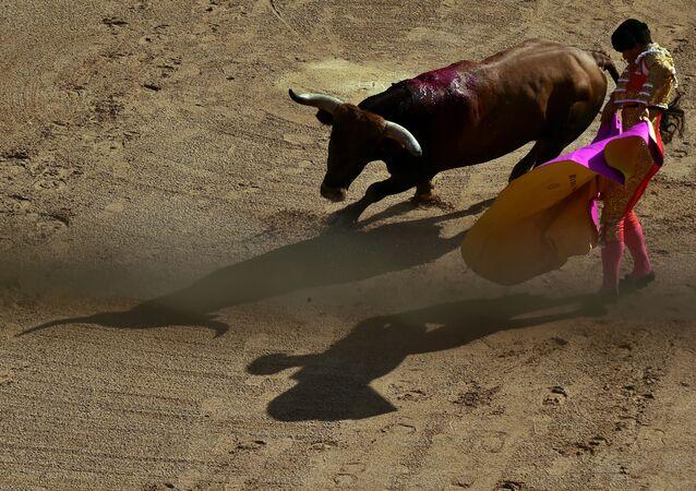 Un torero