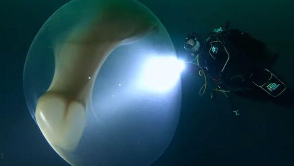 Impactante hallazgo de una bolsa gigante con huevos en el mar de Noruega - Sputnik Mundo