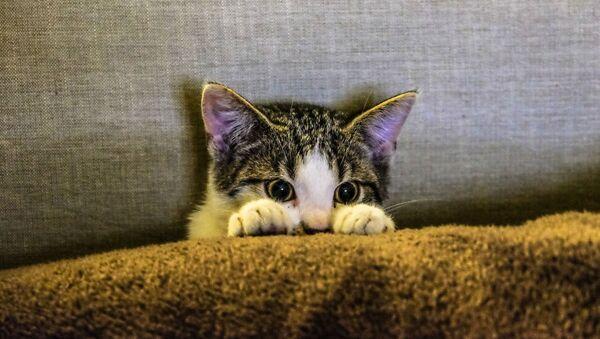 Un gato asustado - Sputnik Mundo