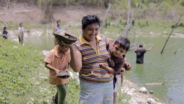 Apicultores maya de la Península de Yucatán - Sputnik Mundo