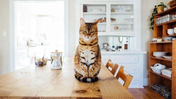 Un gato, foto de archivo - Sputnik Mundo