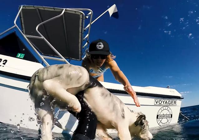 Un youtuber australiano impide que su perrito sea atacado por tiburones