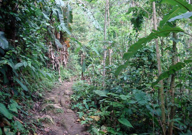 Selva peruana (imagen referencial)