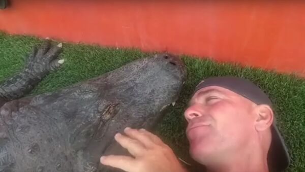 Confianza total: un hombre conversa y besa a un enorme caimán - Sputnik Mundo