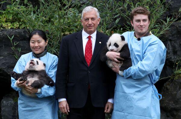 Генеральный директор Pairi Daiza Zoo Эрик Домб с трехмесячными близнецами-пандами Бао Ди и Бао Мей в зоопарке Pairi Daiza в Брюглетте, Бельгия - Sputnik Mundo