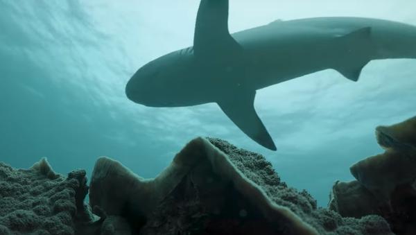 Conoce al dentista de los tiburones  - Sputnik Mundo