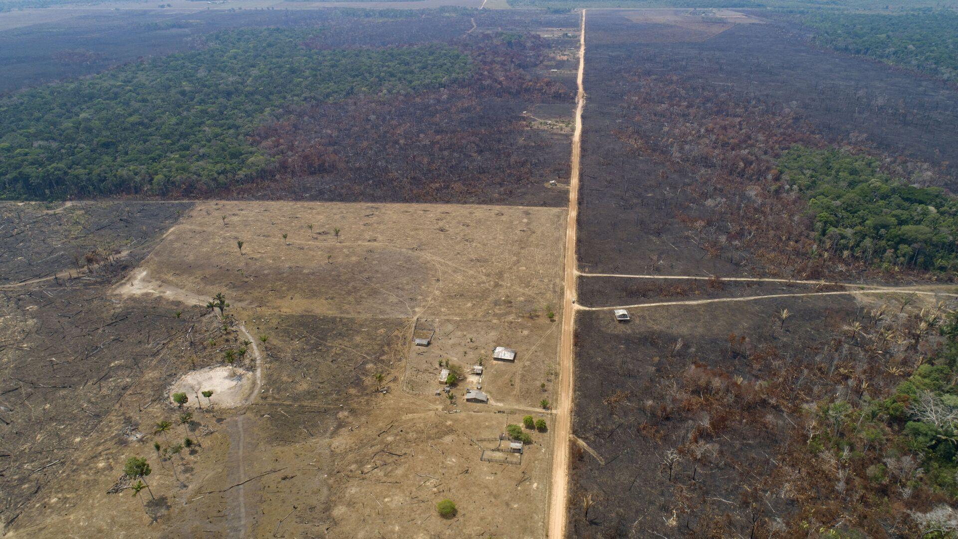 La deforestación en Amazonía - Sputnik Mundo, 1920, 22.04.2021