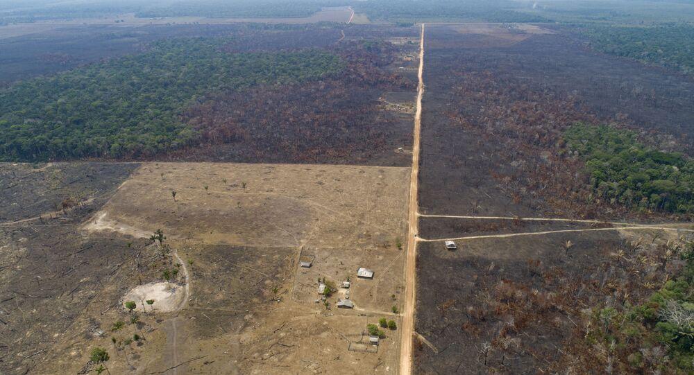 La deforestación en Amazonía