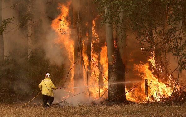 Bomberos intentan apagar incendios forestales en Australia - Sputnik Mundo