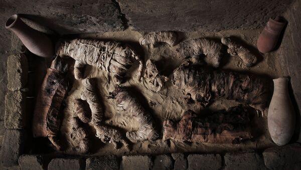 Gatos momificados en la necrópolis de Saqqara, al sur de El Cairo - Sputnik Mundo