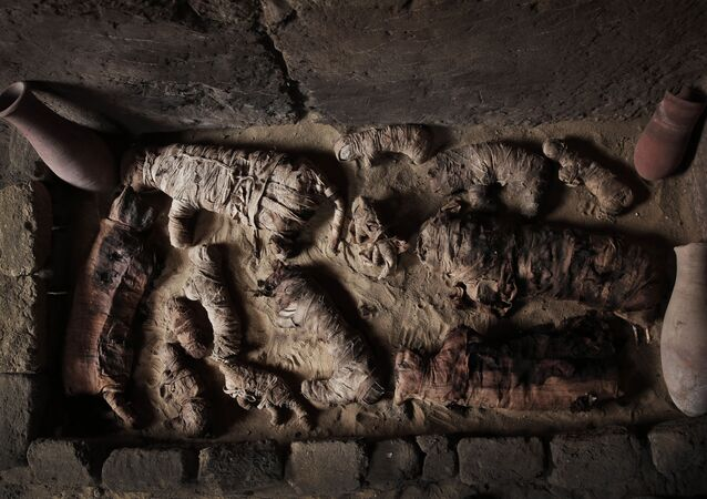 Gatos momificados en la necrópolis de Saqqara, al sur de El Cairo