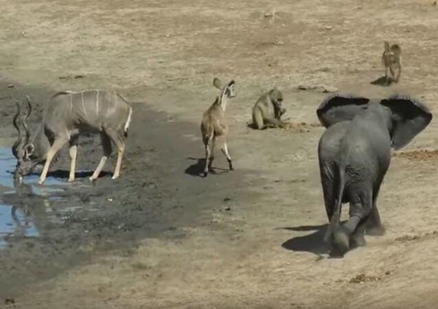 Elefante escandaloso