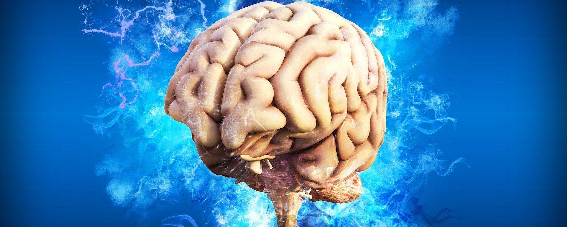 El cerebro humano, referencial - Sputnik Mundo, 1920, 25.03.2021