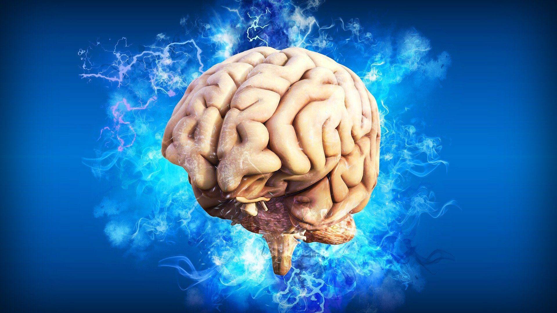 El cerebro humano, referencial - Sputnik Mundo, 1920, 13.04.2021