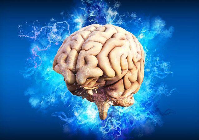 El cerebro humano, referencial