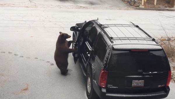 Un oso abre la puerta de un automóvil - Sputnik Mundo