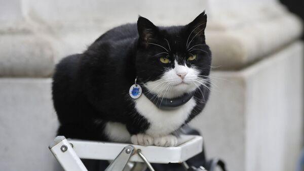 El gato Palmerston - Sputnik Mundo