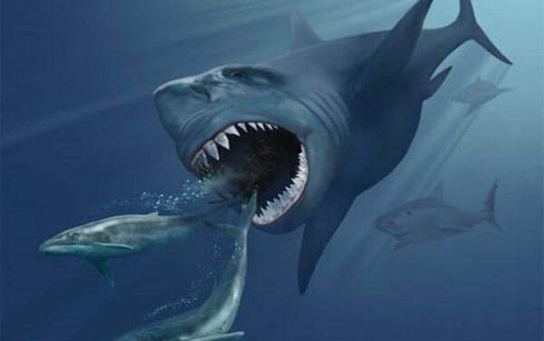 Impresión artística de un megalodón persiguiendo dos ballenas barbadas - Sputnik Mundo