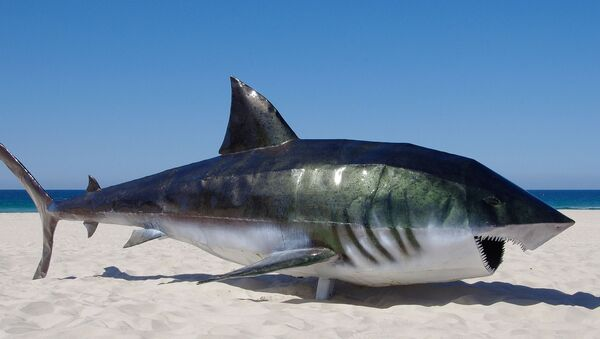 Una escultura de tiburón - Sputnik Mundo