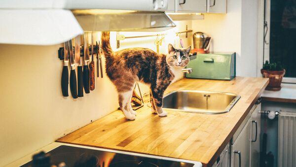 Un gato en una cocina (archivo) - Sputnik Mundo