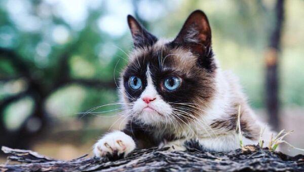 Grumpy Cat, foto de archivo - Sputnik Mundo