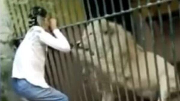Un león agarra al empleado de un zoológico por el brazo - Sputnik Mundo