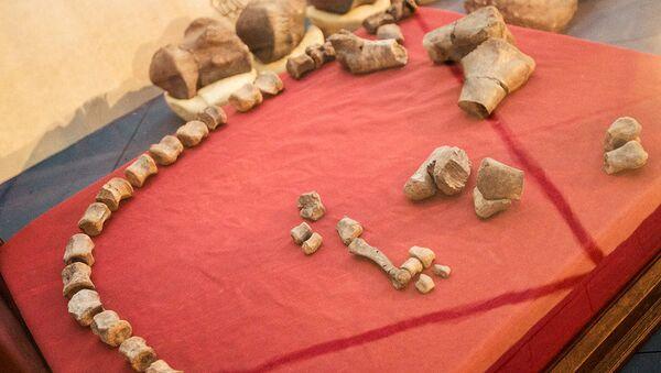 Fósiles encontrados por investigadores del Conicet en El Calafate - Sputnik Mundo