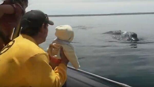 ¿Dónde está la ballena? El tierno juego entre este enorme animal y un bebé - Sputnik Mundo