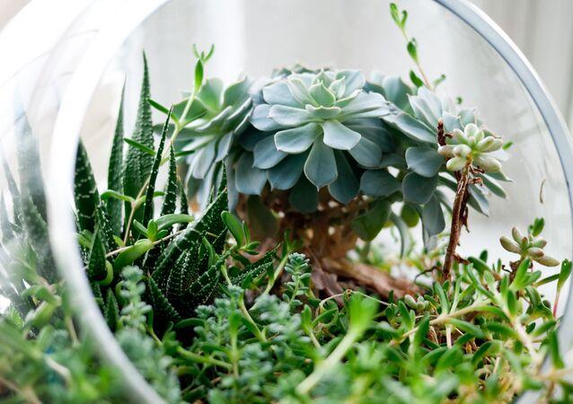 Plantas (imagen referencial)