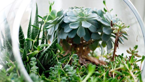 Plantas (imagen referencial) - Sputnik Mundo