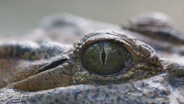 Un ojo de un reptil - Sputnik Mundo