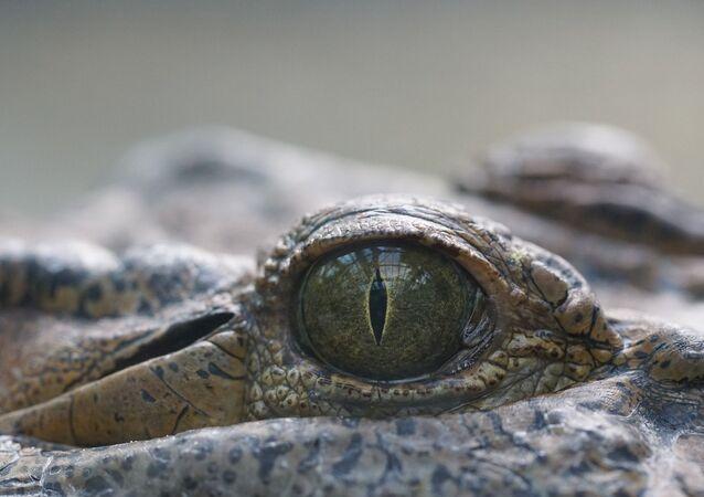 Un ojo de un reptil