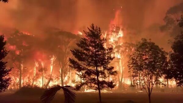 Incendios forestales en Australia - Sputnik Mundo