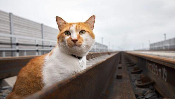 Móstik, el gato del puente de Crimea - Sputnik Mundo