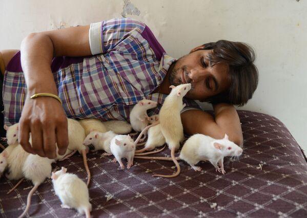 2020, el año de la rata blanca de metal en el Zodíaco chino - Sputnik Mundo