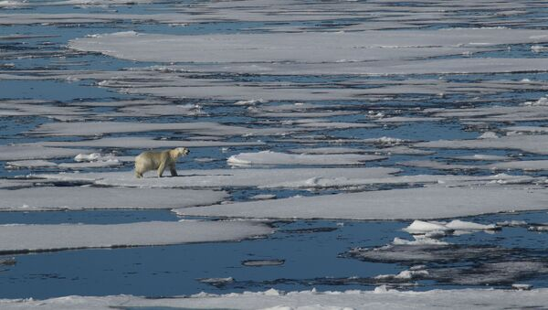 Un oso polar (archivo) - Sputnik Mundo