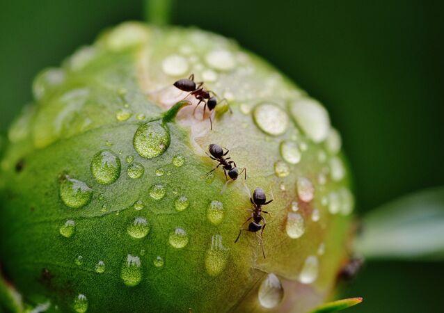 Hormigas con agua
